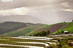 Södra asiatisk rice sätter in terrasser. Royaltyfria Foton