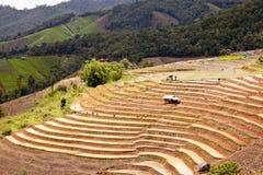 Södra asiatisk rice sätter in terrasser. Fotografering för Bildbyråer