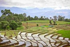 Södra asiatisk rice sätter in terrasser. Arkivfoto