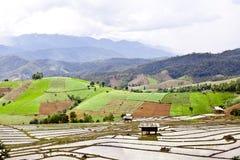 Södra asiatisk rice sätter in terrasser. Royaltyfria Bilder