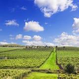 Södra Australien för vingård fyrkant Royaltyfria Bilder