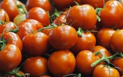 Södra australiska söta tomater Arkivfoto