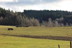 Södra Bohemia Royaltyfria Bilder