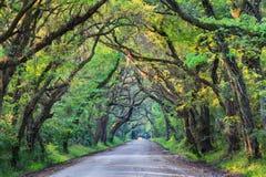 Södra Carolina Botany Bay Road Tree tunnel royaltyfria bilder