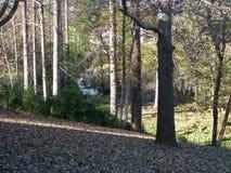 Södra Carolina Creek i träd Arkivbild