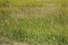 södra dakota Royaltyfria Bilder