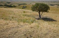 södra dakota Fotografering för Bildbyråer