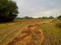 Södra fält Arkivbild