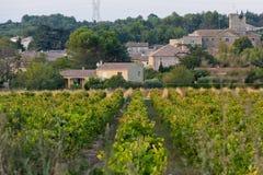 Södra Frankrike vingårdar Royaltyfri Bild