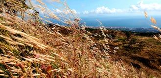 Södra Italien, fält av havre och havet arkivfoto
