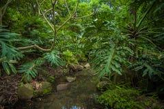 Södra Kinabotanisk trädgård Royaltyfria Foton