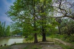 Södra Kinabotanisk trädgård Royaltyfri Fotografi