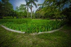 Södra Kinabotanisk trädgård Royaltyfria Bilder