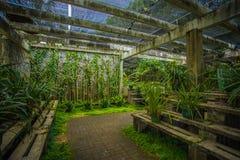 Södra Kinabotanisk trädgård Arkivbild
