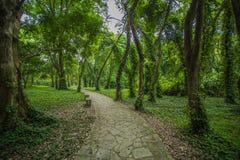 Södra Kinabotanisk trädgård Arkivfoto