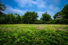 Södra Kinabotanisk trädgård Arkivfoton