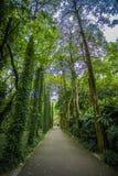 Södra Kinabotanisk trädgård Fotografering för Bildbyråer