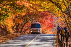 SÖDRA KOREA-NOVEMBER 2017: Höst av den Naejangsan nationalparken, Sydkorea royaltyfri bild