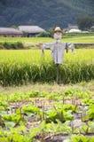södra korea scarecrow Royaltyfri Bild