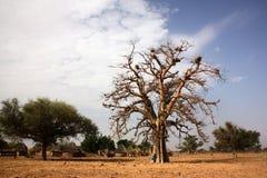 södra naturlig reserv för africa liggandemadikwe Arkivbild