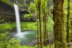 Södra nedgångar i silveren faller delstatsparken, Oregon, USA Royaltyfria Bilder