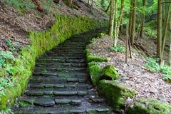 Södra Rim Trail på Fillmore Glen State Park royaltyfri bild