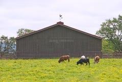Södra rodeo royaltyfri foto