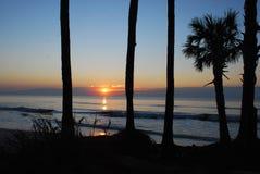 södra soluppgång för carolina jaktö Arkivbilder