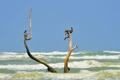 Södra Texas Seascape Royaltyfri Bild