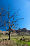 södra trees för africa berg Royaltyfri Fotografi