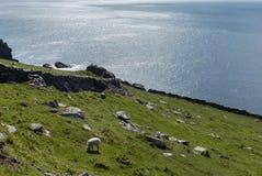 Södra västkusten Irland nära Dingle Arkivbilder