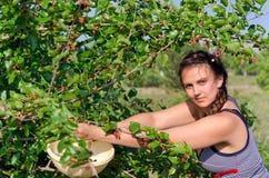 Söka efter föda för sommarfrukter royaltyfri foto