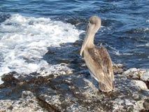 Söka efter fisken Royaltyfri Foto