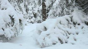 Sökande i vinterskogen lager videofilmer