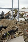Sökande- & räddningsaktionkatastrofzon royaltyfri foto