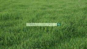 Sökande som bläddrar, information om internetdata, över fält av mjuk gräsplan fotografering för bildbyråer