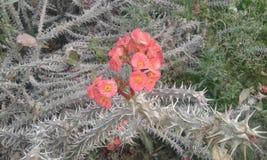 sökandehappyness inom dina sorger! precis som denna blomma! Royaltyfri Fotografi