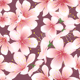 Sömlös bakgrund av den körsbärsröda blomningen Fotografering för Bildbyråer