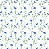 Sömlös bakgrund av vildblommor Blåklint modell Royaltyfria Bilder