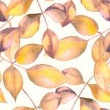 Sömlös bakgrund för abstrakt vattenfärg för vektor blom- Royaltyfria Bilder