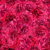 Sömlös bakgrund för alldeles röda naturliga rosor vattenfärg royaltyfri fotografi