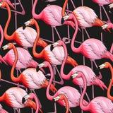 Sömlös bakgrund för färgrik flamingo stock illustrationer