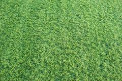 Sömlös bakgrund för grönt gräs Arkivfoto