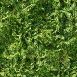 Sömlös bakgrund för grönt gräs Seamless gräs Ny för mossagolv för grönt gräs bakgrund för textur för trädgård Naturbakgrund Arkivbilder