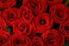 Sömlös bakgrund för röda rosor Arkivfoton