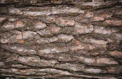 Sömlös bakgrund för trädskäll Arkivbild