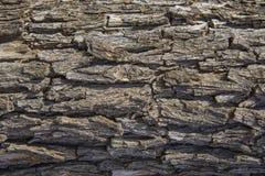 Sömlös bakgrund för trädskäll Brun tileable textur av det gammalt Arkivfoton