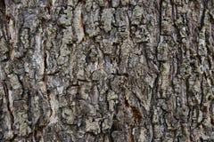 Sömlös bakgrund för trädskäll Brun tileable textur av det gammalt Royaltyfri Bild