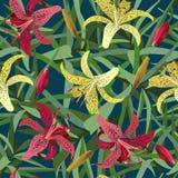 Sömlös bakgrund från den gula och röda blomman för tigerlilja Royaltyfri Bild