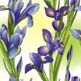Sömlös bakgrund med blåa iriers vektor illustrationer